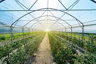 В Америці теплиці облаштовують прозорими сонячними панелями
