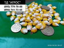 Урожайна кукурудза Вітчизняного Виробництва. Кукурудза Вітчизняного Виробництва ФАО 180-350.
