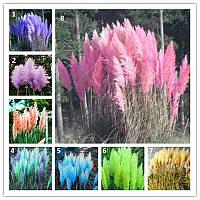 10 семян Камыша декоративного - Pampas Grass (8 видов на выбор) / семена камыша 10 / Насіння камишу 10 штук