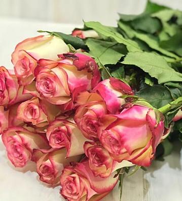 "Троянда ч/г ""Палома"""
