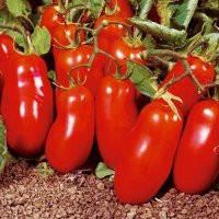 """Семена томата """"Кибиц"""""""