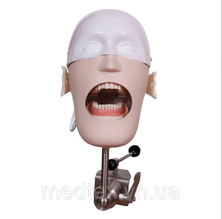 Стоматологічний симулятор, манекен, фантом для демонстрація практичних навичок.