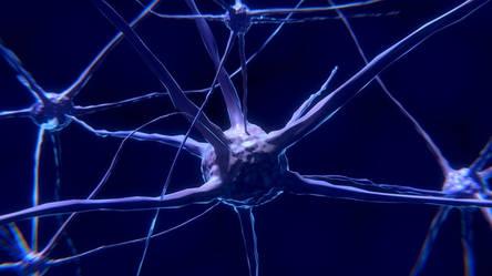 Нейромандалы «Magma 8» формируют новые нейронные связи мозга