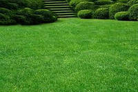 Семена Мятлика для низкорослого газона 1кг