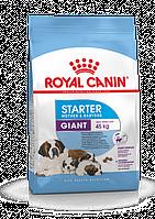 Royal Canin (Роял Канин) Giant Starter корм для щенков до 2-х месяцев, беременных и кормящих сук, 4 кг