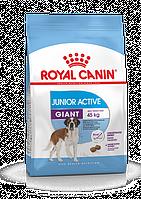 Royal Canin (Роял Канин) Giant Junior Active корм для щенков с высокими энергетическими потребностями, 15 кг