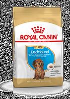 Royal Canin (Роял Канин) Dachshund Junior сухой корм для щенков таксы, 1.5 кг