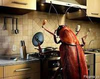 Дезинсекция-уничтожение насекомых(клопы,тараканы и др)