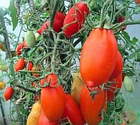 Томат 'Буратино', фото 1