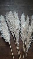 Кортадерия пампасная трава(1ветка)