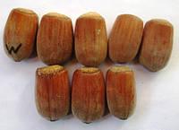 Фундук сорт Ценный Вебба. Саженцы в контейнерах Д12., фото 1