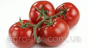 Семена красного томата Корвинус F1 500 шт, Семинис