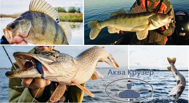 Рыбалка с лодки - рыбалка с лодки на днепре - ловля с лодки - рыбалка с лодки на днестре