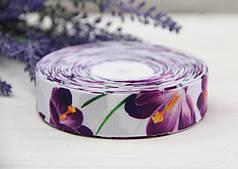"""Репс    """" Крокусы     """" фиолетовые на белом фоне      2,5 см       рулон 25 ярдов"""