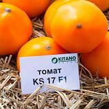 Нукси(KS 17 F1) семена томата низкорослого Kitano Голландия 500 шт, фото 2