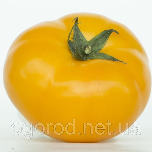 Нукси(KS 17 F1) семена томата низкорослого Kitano Голландия 500 шт