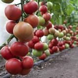 КС 1157(KS 1157 F1) семена томата розового Kitano Голландия 100 шт, фото 2