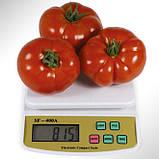 КС 204(KS 204 F1) семена томата Kitano Голландия 100 шт, фото 2