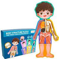Пазл детский анатомия человека