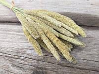 Луговая тимофеевка, натуральный сухоцвет, 50 шт. в букете, 25 грн., фото 1
