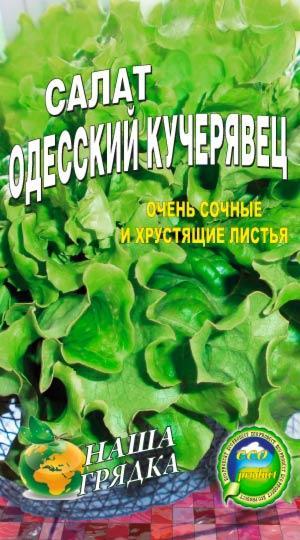 Салат Одесский кучерявец 1500 семян