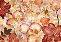 Фотообои швейцарские Сухі квіти 366*254 (8ч) B4 (код 963 )