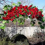 Кущ в'ється червоної троянди штучною., фото 3