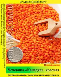 Семена чечевицы «Канадка» красная 25 кг (мешок)