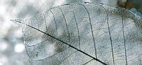 Декор Интеркерама Магия 23x50 серый (71)