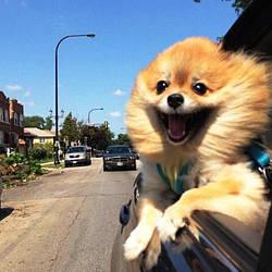 Как правильно перевозить собаку в машине? Подскажем!