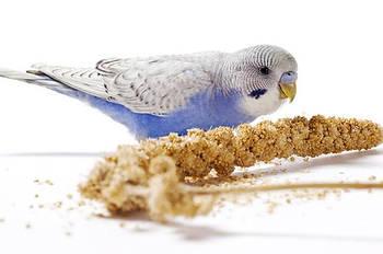 Корма и лакомства для декоративных птиц