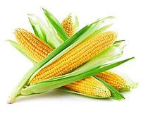 Применение удобрений от Терра Тарса для Кукурузы