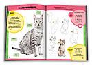 Вчимося малювати котів і кошенят, фото 2