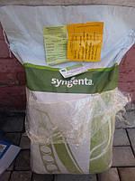 Семена гороха Муцио (Syngenta) 100000 семян / 100 тыс сем — среднеспелый (65-66 дней), овощной, фото 1