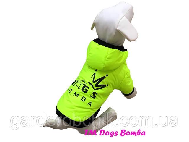 Куртка для собаки К-56. Одежда для собак
