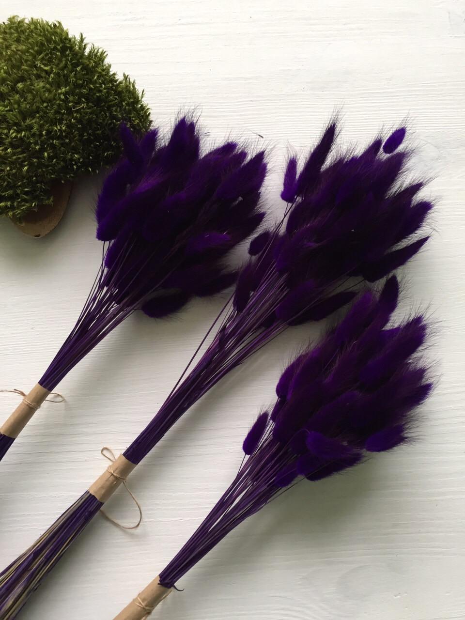 Лагурус тёмно фиолетовый  ( 50 шт)