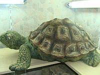 Керамическая черепаха 1-ая
