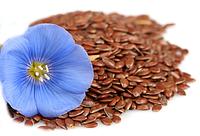 Лен обыкновенный (Linum usitatissimum) семена 1 кг.