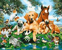 Картины по номерам 40×50 см. Домашние животные
