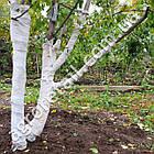 Садовый бинт плотность 50 рулон 0.2x10 м, фото 4