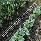 Шпалерная сетка для огурцов ячейка 150x150 мм рулон 1.7х500 м, фото 2