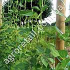 Шпалерная сетка для огурцов ячейка 150x150 мм рулон 1.7х500 м, фото 3
