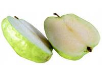 Саджанці яблуні МАТРЬОШКА осіннього строку (дворічні)