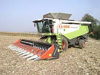 Dominoni жатка для збирання кукурудзи Dominoni S966B