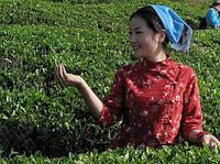 Институт чая проводит набор