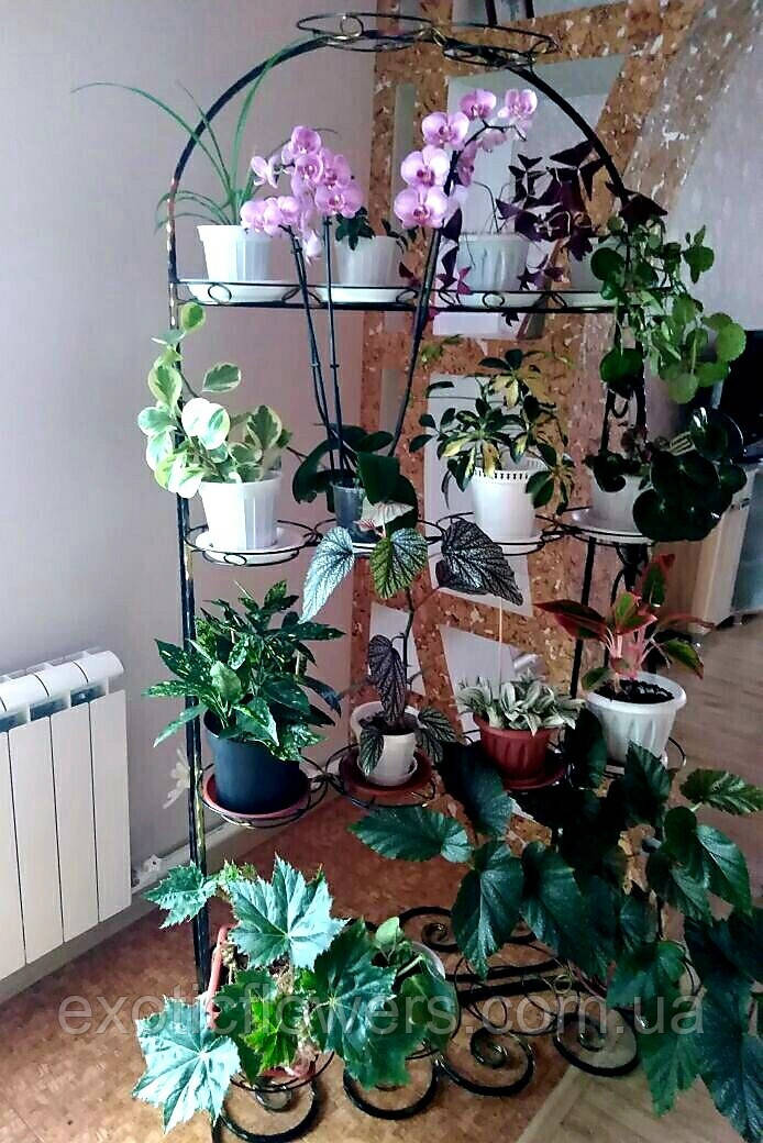 """Підставка для квітів на 18 чаш """"Арка похила-3"""""""