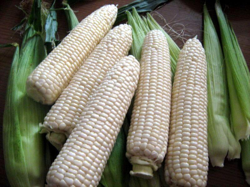 Белоснежная сладкая Кукуруза
