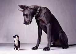 За какой собакой легче ухаживать: маленькой или большой?