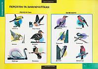 Плакат Перелітні та зимуючі птахи