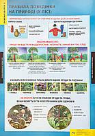 Правила поведінки на природі (у лісі)